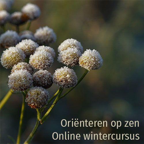 online wintercursus oriënteren op zen
